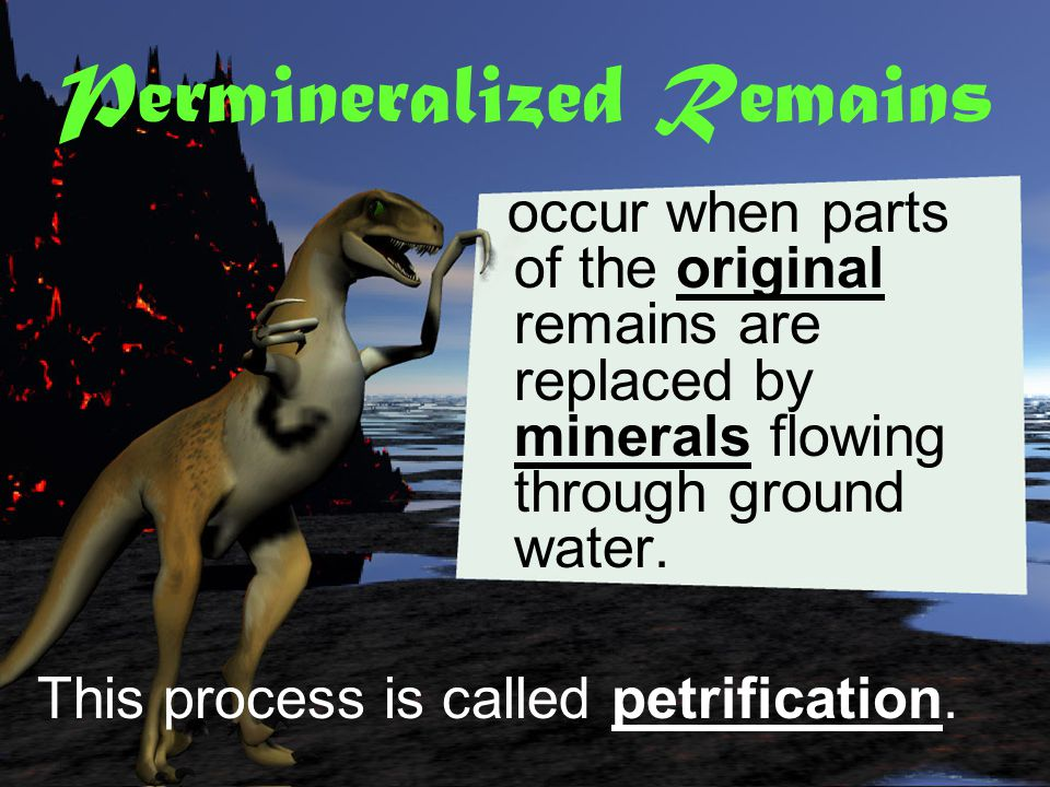 Permineralized remains Carbon films Molds & Casts Original Remains Trace Fossils