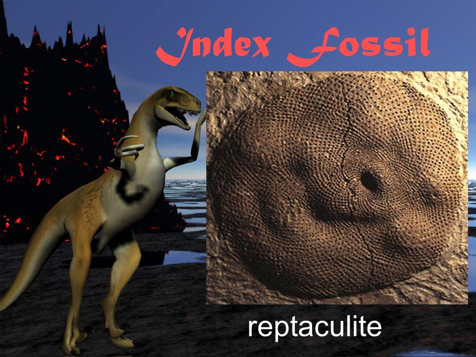 Index Fossil ammonite