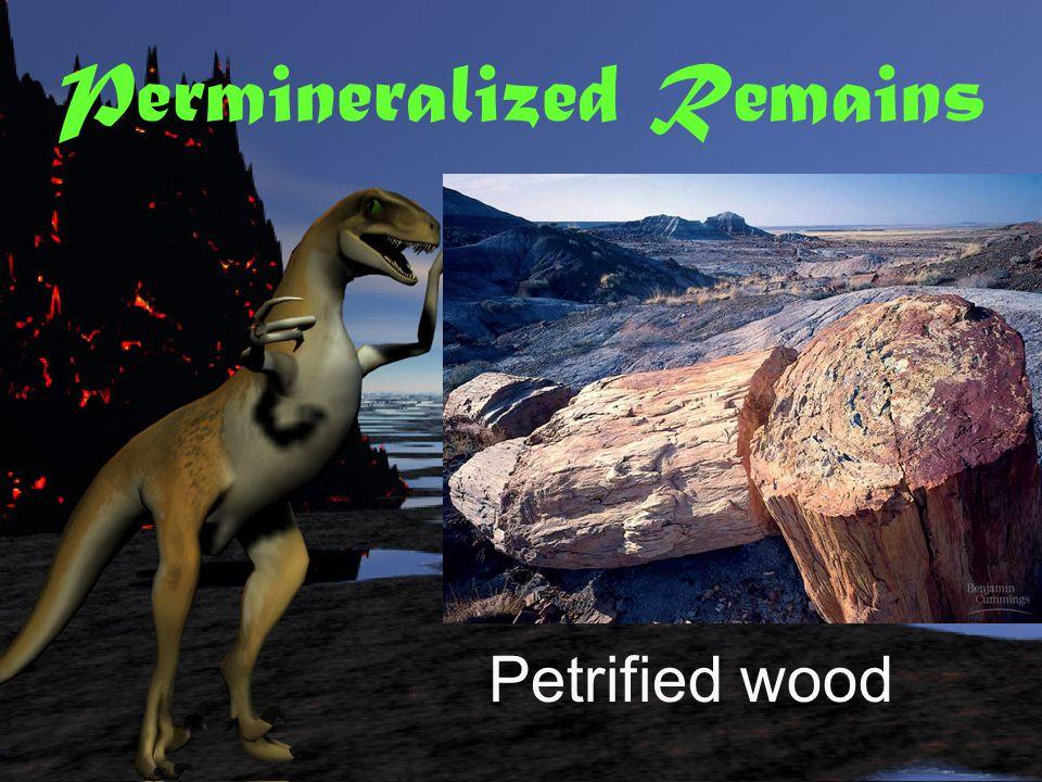 Permineralized Remains Fossil dimetrodon
