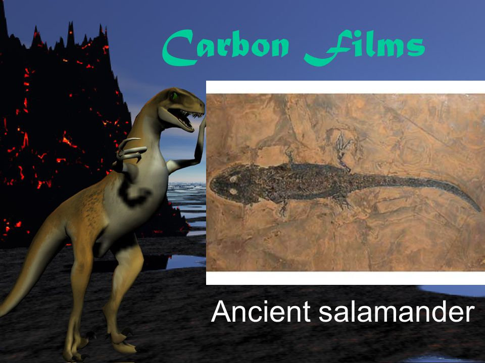 Carbon Films Beech leaf