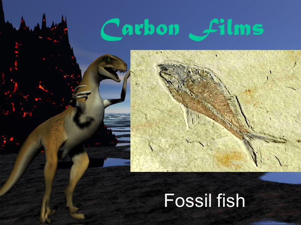 Carbon Films Ancient salamander