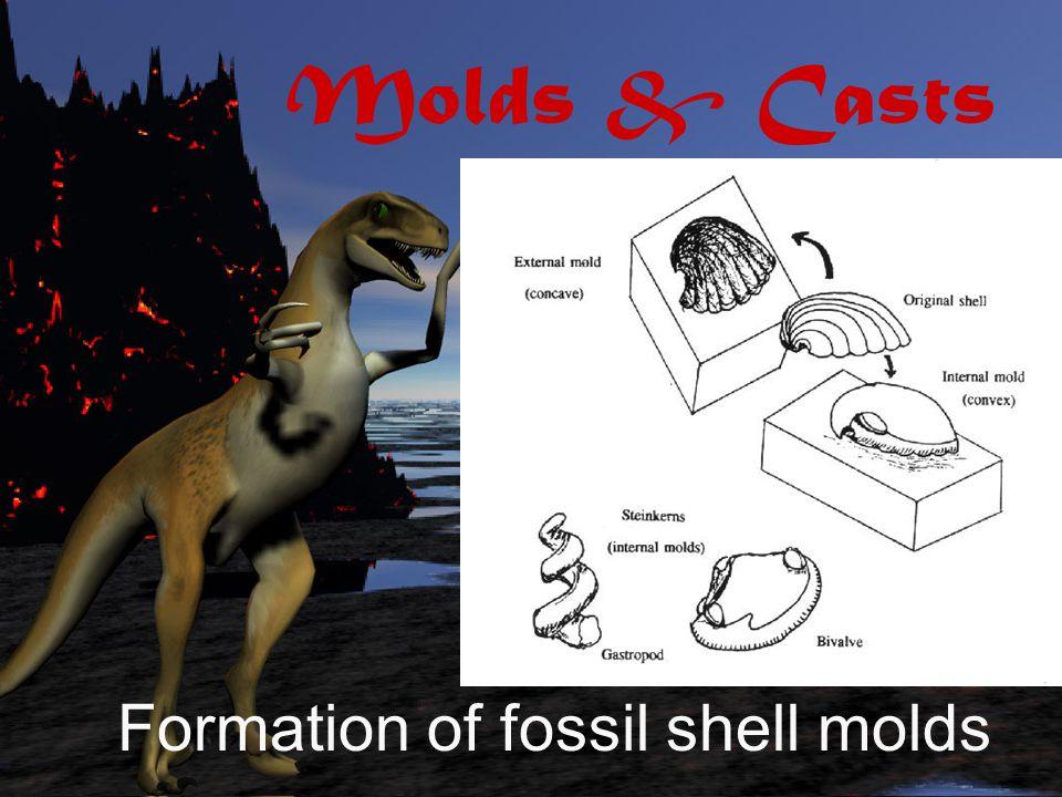 Carbon Films Fossil fish