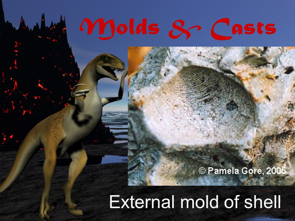 Molds are hollow areas left in sediment that show the shape of the original organism.