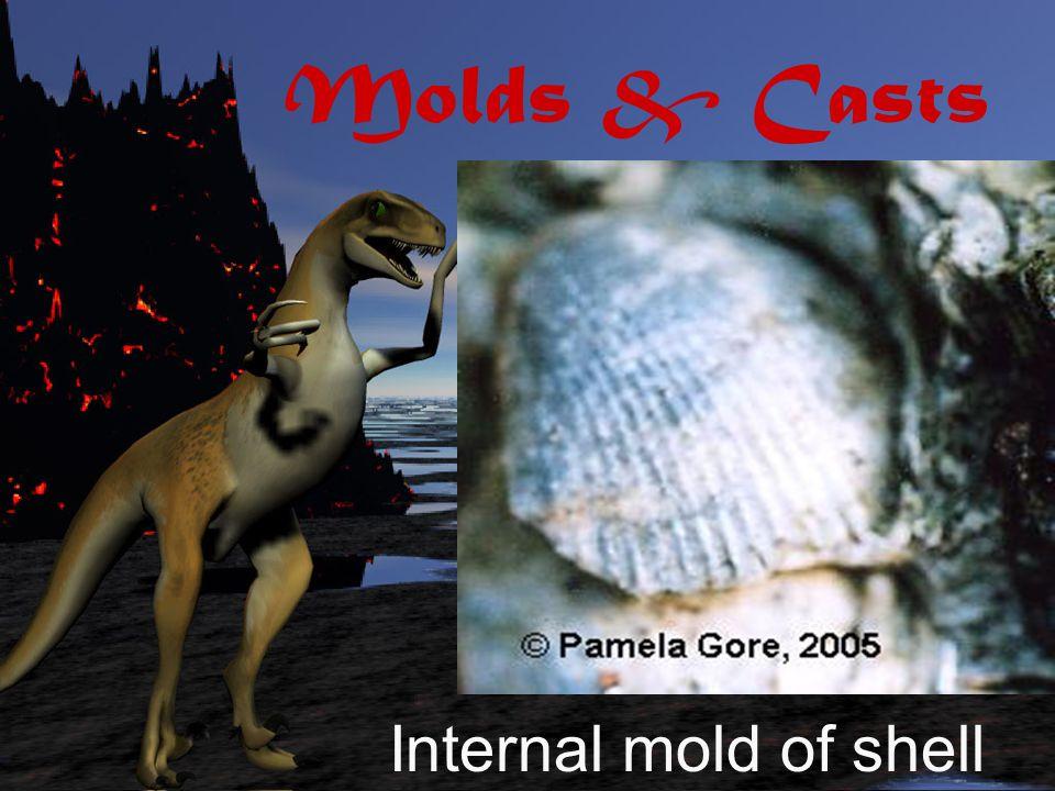 Molds & Casts External mold of shell