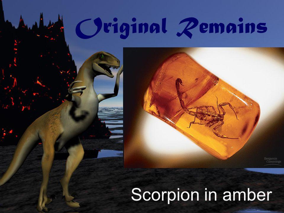 Original Remains Bee encased in amber