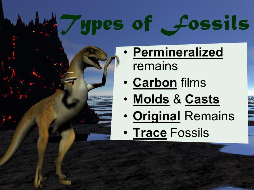 Index Fossil trilobite