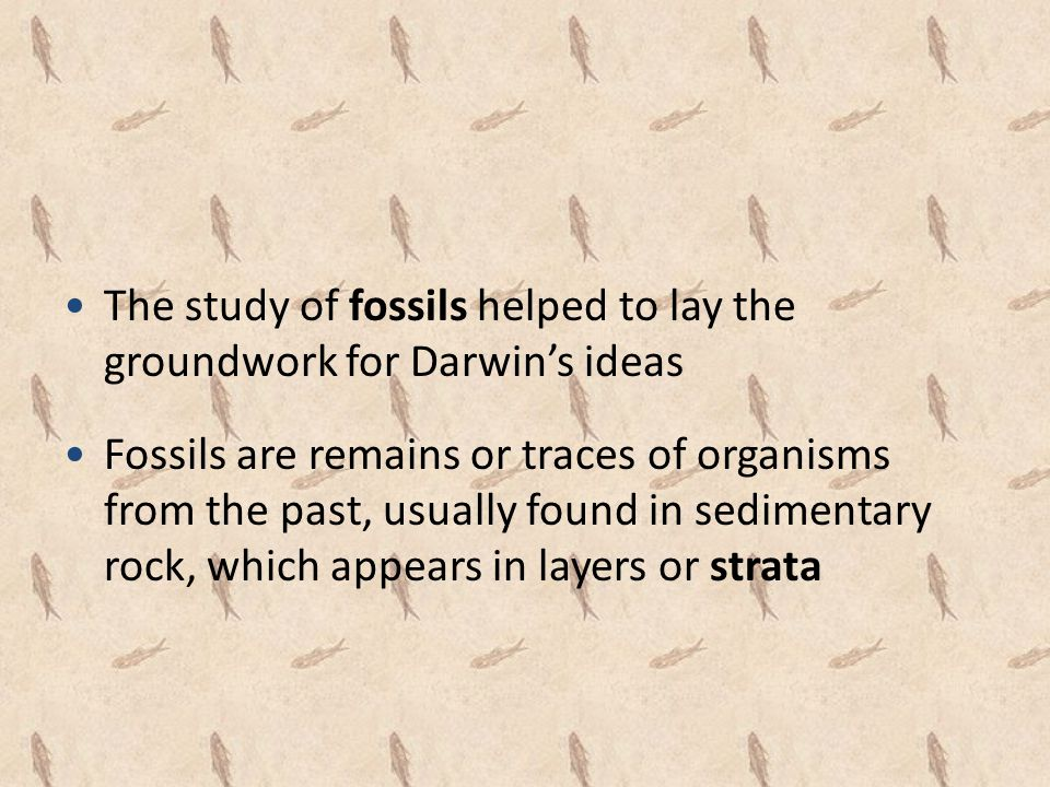 The study of fossils helped to lay the groundwork for Darwin's ideas Fossils are remains or traces of organisms from the past, usually found in sedime
