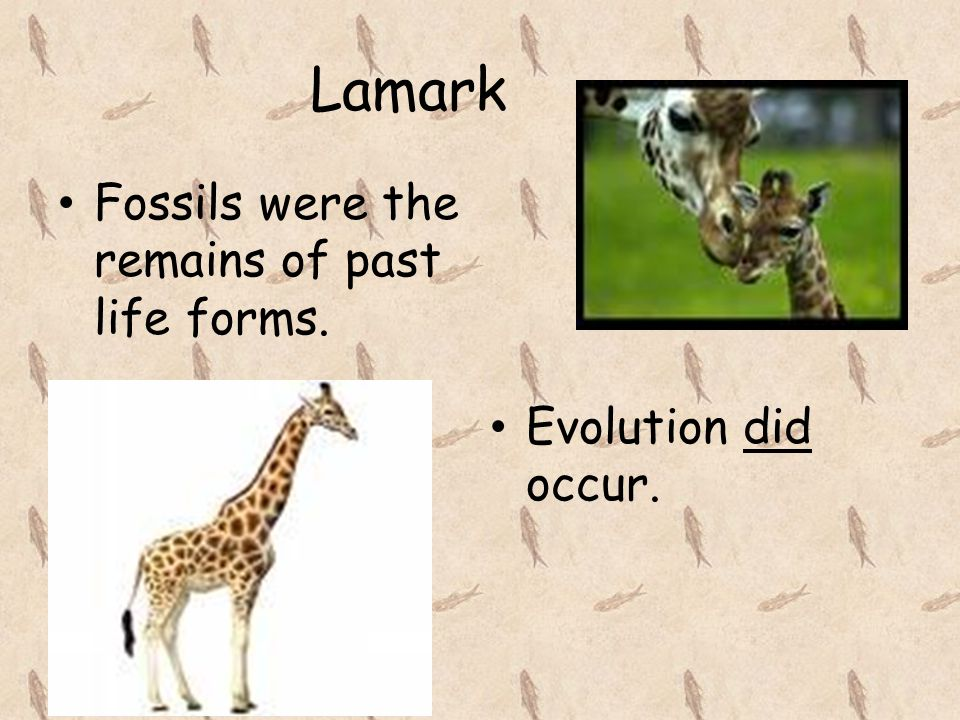 Lamark Fossils were the remains of past life forms. Evolution did occur.
