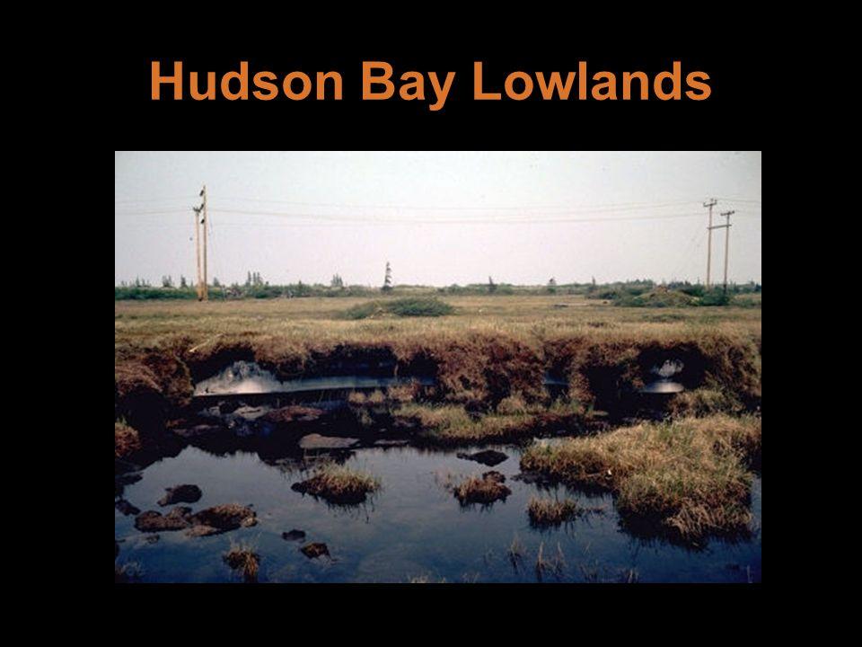 Hudson Bay Lowlands