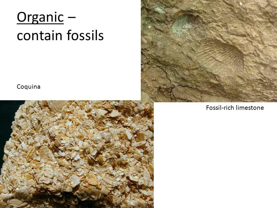 Organic – contain fossils Coquina Fossil-rich limestone