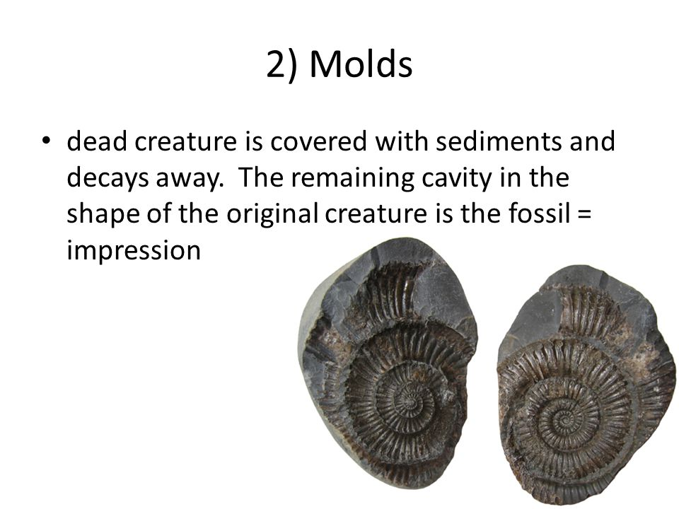 2) Molds dead creature is covered with sediments and decays away.