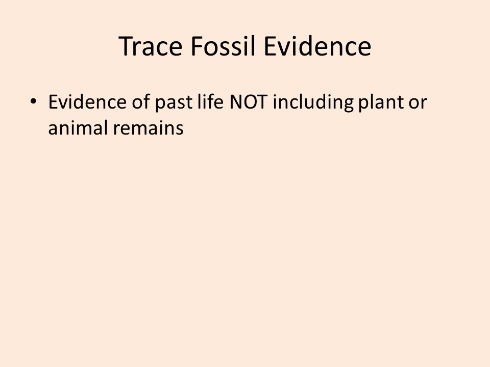 Trace Fossil Evidence Evidence of past life NOT including plant or animal remains