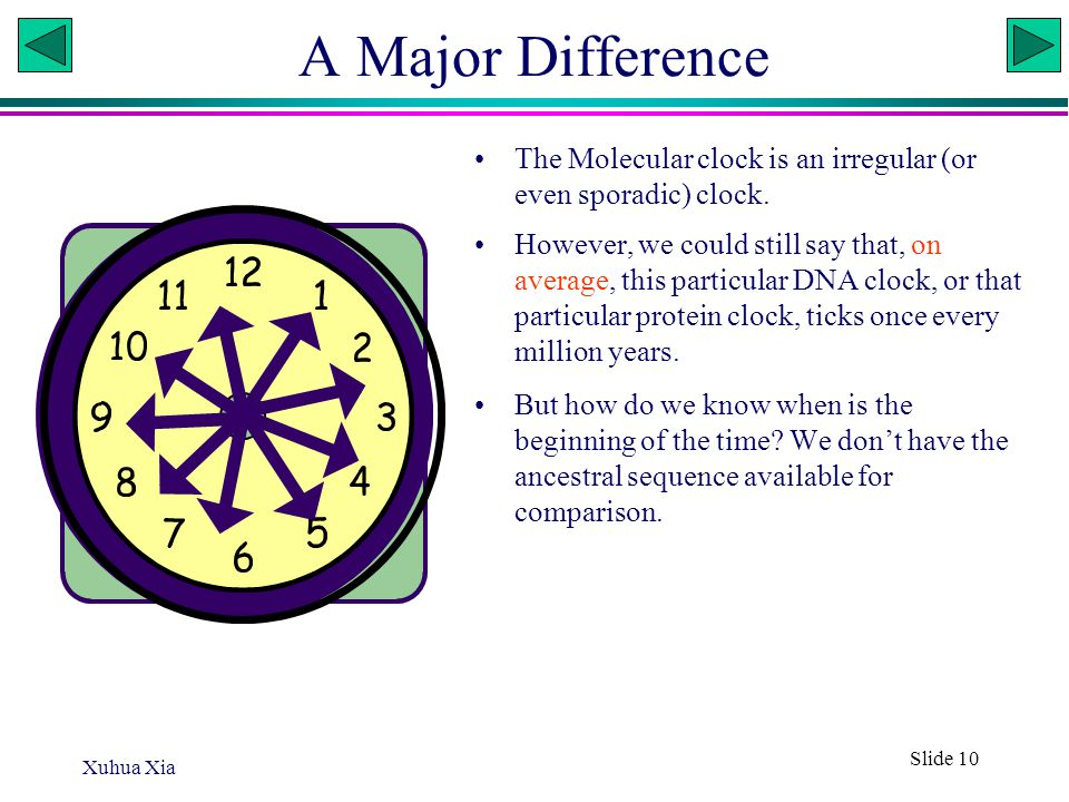 Xuhua Xia Slide 10 A Major Difference The Molecular clock is an irregular (or even sporadic) clock. However, we could still say that, on average, this
