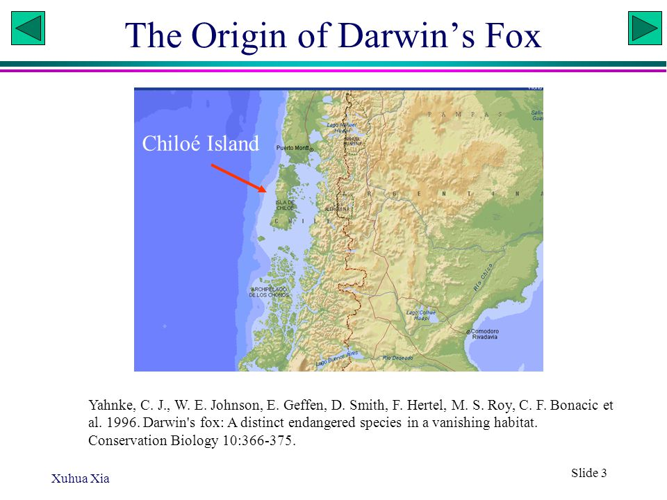 Xuhua Xia Slide 4 Dusicyon fulvipes In the evening we reached the island of S.
