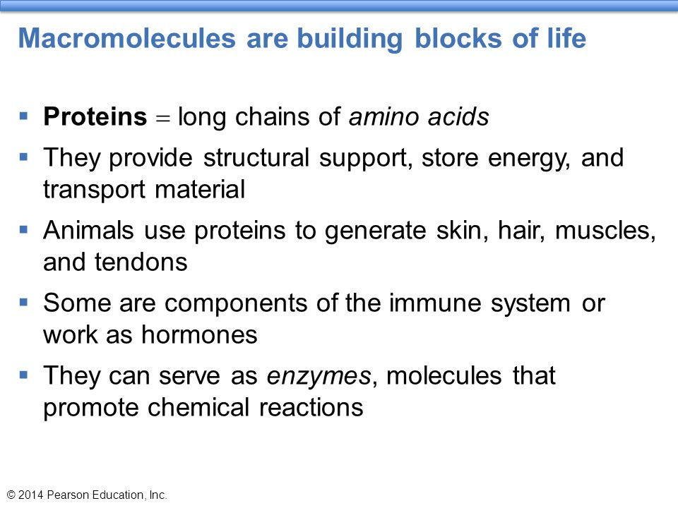 Macromolecules are building blocks of life  Proteins  long chains of amino acids  They provide structural support, store energy, and transport mate