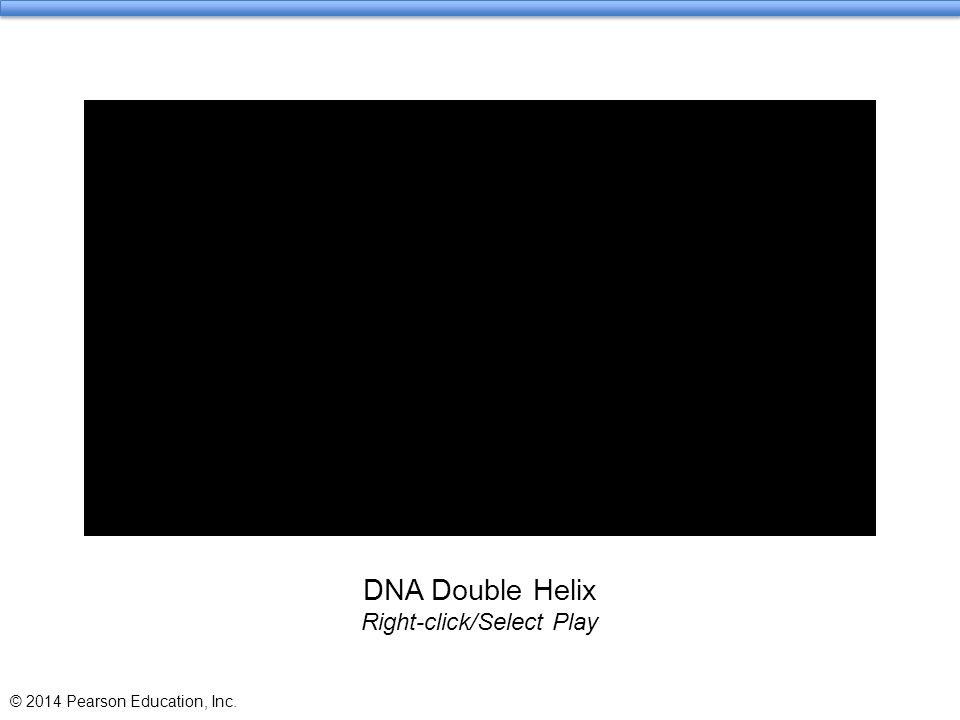 DNA Double Helix Right-click/Select Play