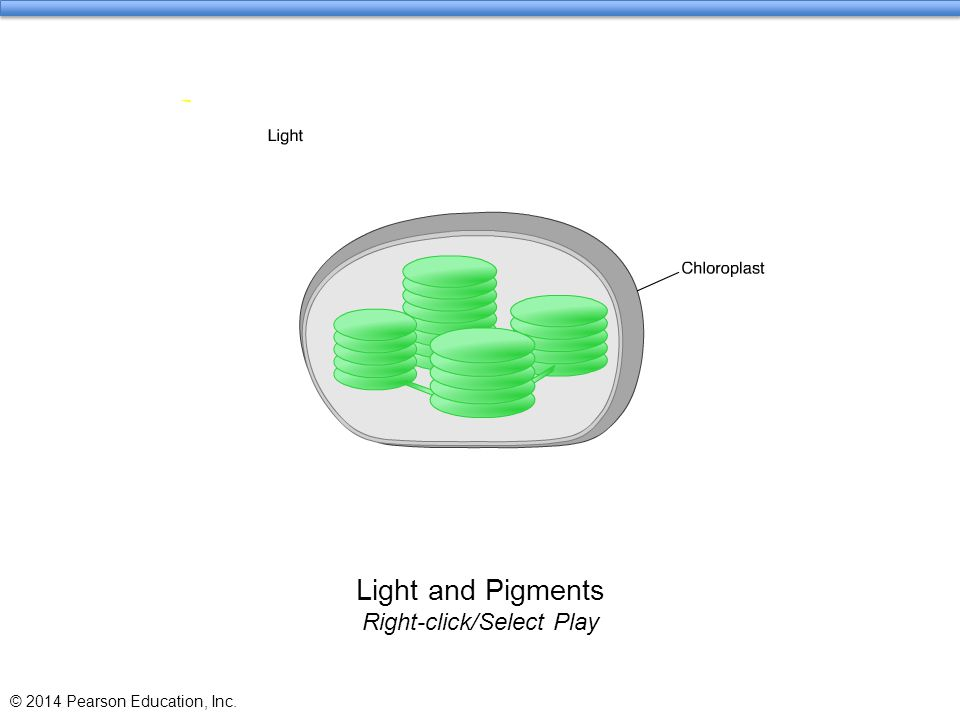 Light and Pigments Right-click/Select Play