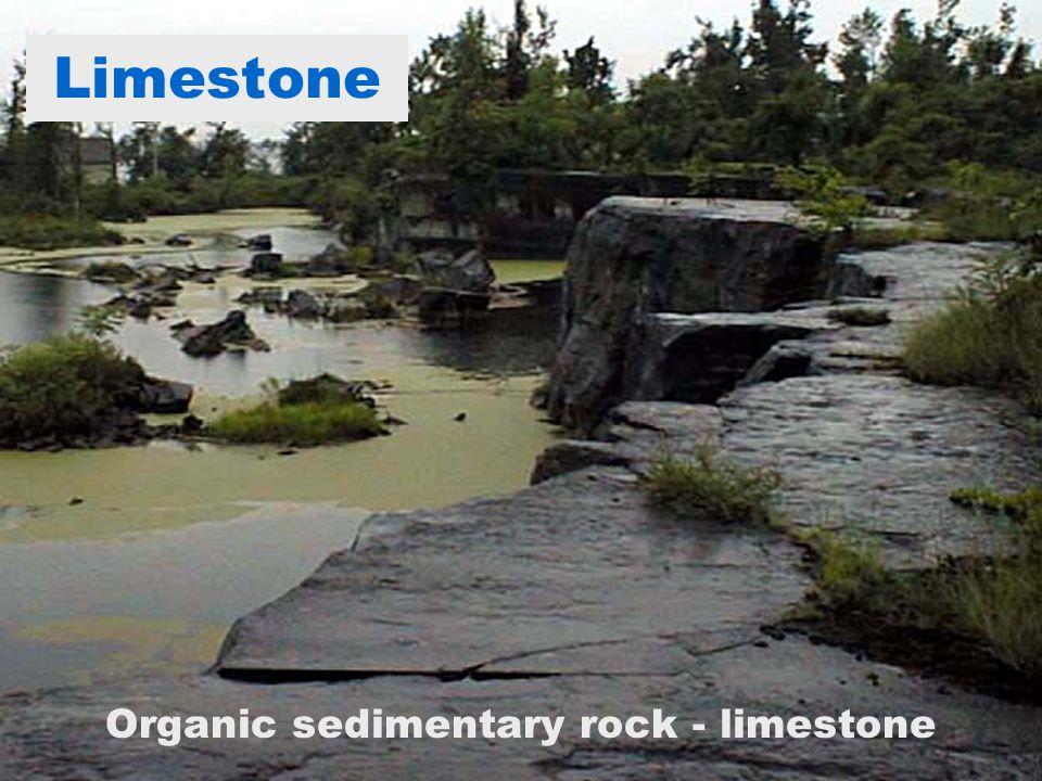 Limestone Organic sedimentary rock - limestone