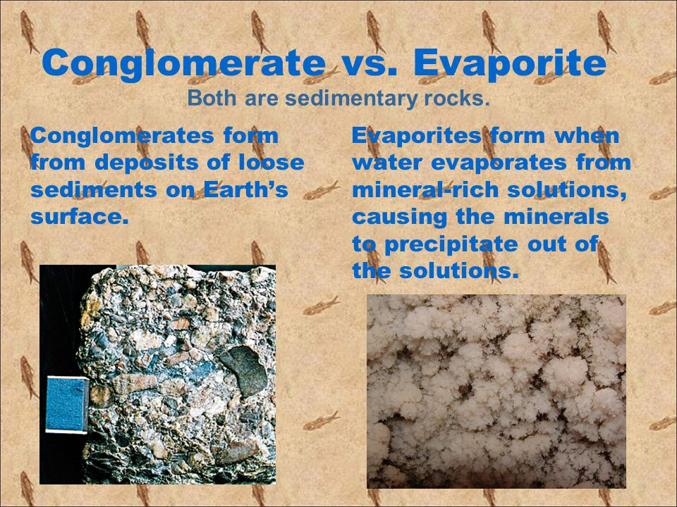 Conglomerate vs. Evaporite Conglomerates form from deposits of loose sediments on Earth's surface. Evaporites form when water evaporates from mineral-