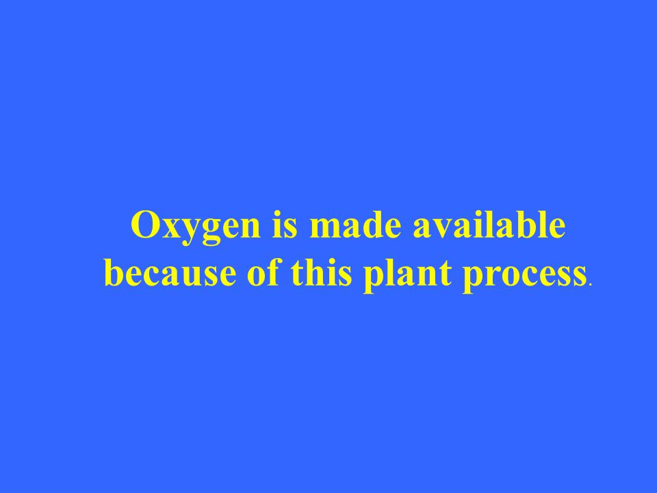 Oxygen is made available because of this plant process.