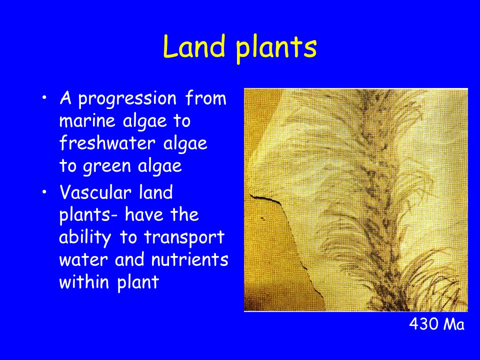 Land plants A progression from marine algae to freshwater algae to green algae Vascular land plants- have the ability to transport water and nutrients within plant 430 Ma