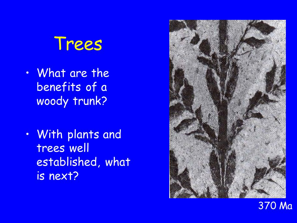 Trees What are the benefits of a woody trunk. With plants and trees well established, what is next.