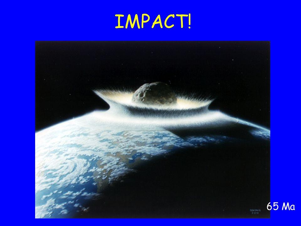 IMPACT! 65 Ma