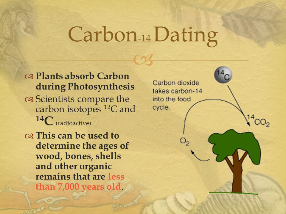 Carbon -14 Dating  Plants absorb Carbon during Photosynthesis  Scientists compare the carbon isotopes 12 C and 14 C (radioactive)  This can be used to determine the ages of wood, bones, shells and other organic remains that are less than 7,000 years old.