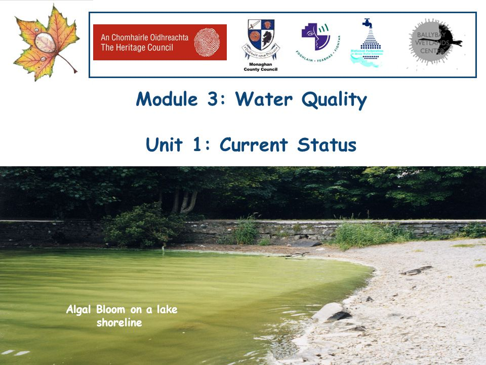 Our Water, Our Resource, Our Responsibility www.worldofwater.ie Module 3: Water Quality Unit 1: Current Status Algal Bloom on a lake shoreline
