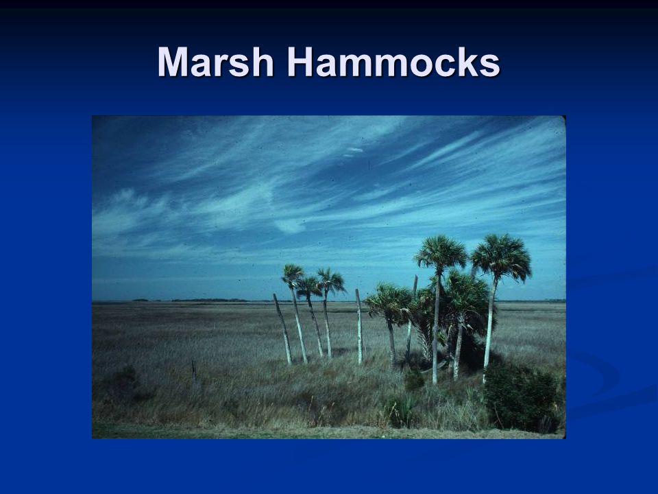 Bedrock Control on Marsh Hammocks