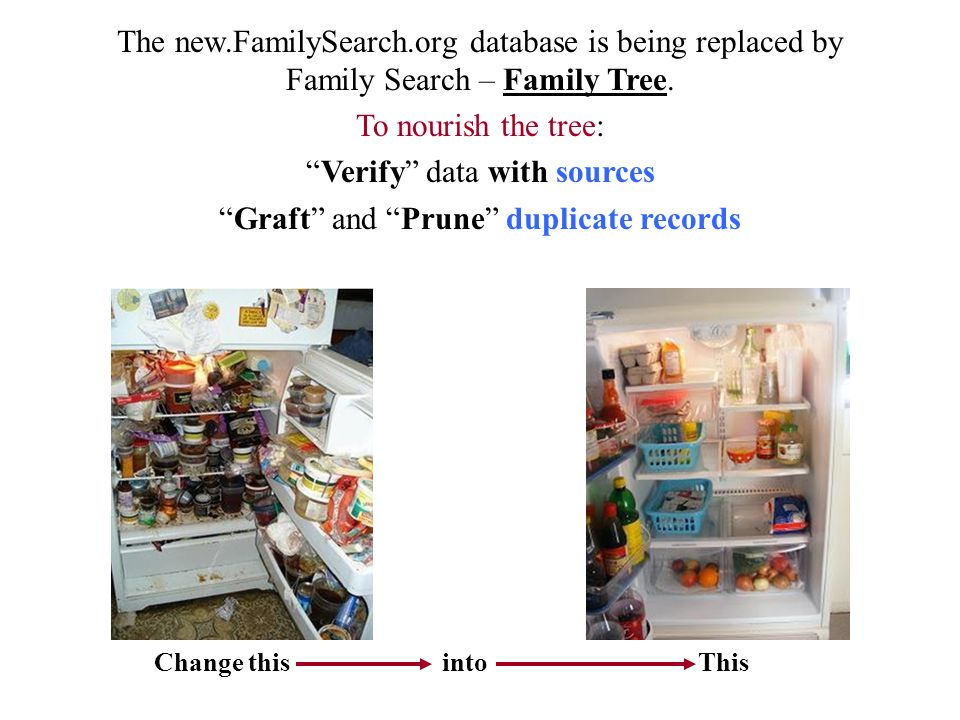 """The new.FamilySearch.org database is being replaced by Family Search – Family Tree. To nourish the tree: """"Verify"""" data with sources """"Graft"""" and """"Prune"""