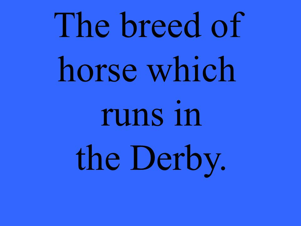 The breed of horse which runs in the Derby.