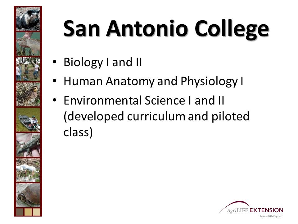 San Antonio College Biology I and II Human Anatomy and Physiology I Environmental Science I and II (developed curriculum and piloted class)