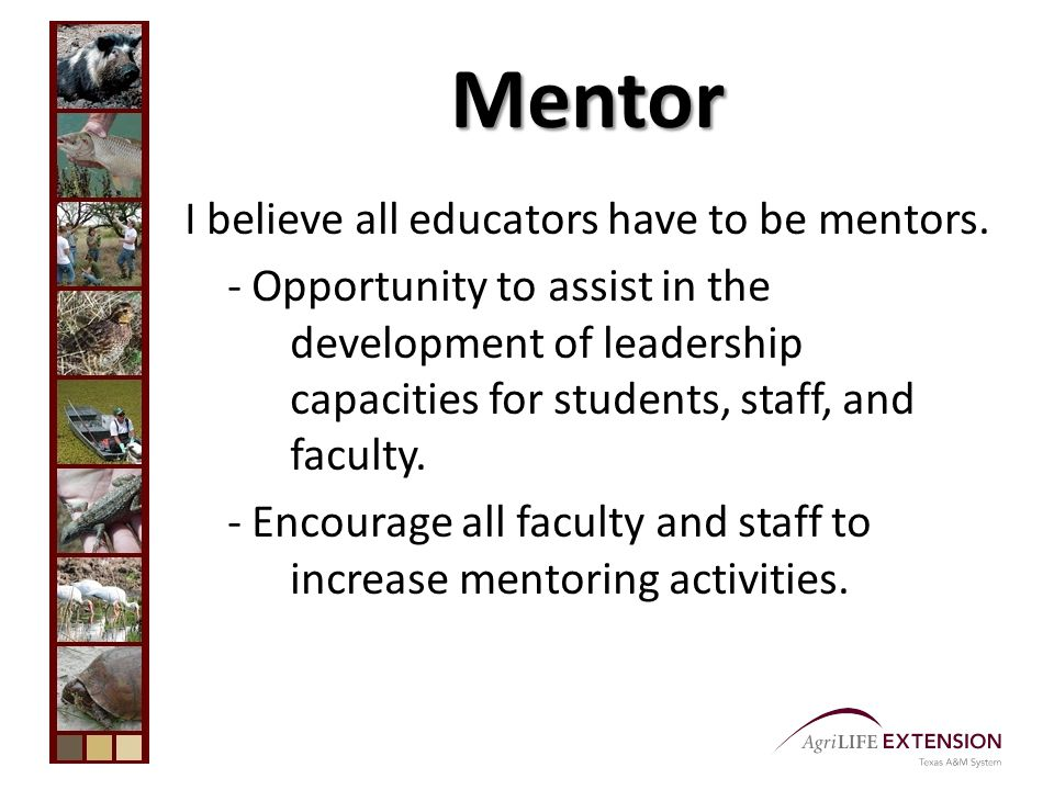 Mentor I believe all educators have to be mentors.