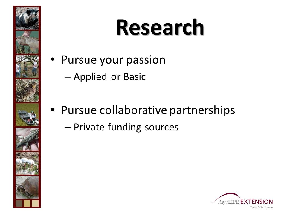 Research Pursue your passion – Applied or Basic Pursue collaborative partnerships – Private funding sources