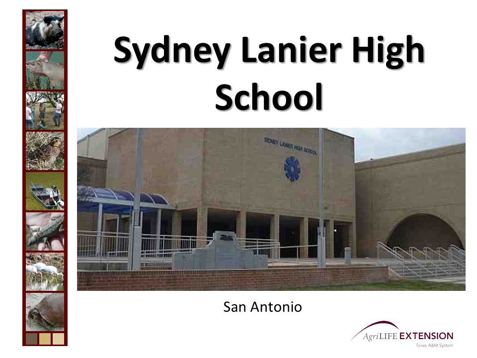 Lanier High School Biology I Biology II Environmental Science (revised curriculum to meet SAISD standards and course established district-wide) Student Council Sponsor (4 years) Teacher of the Year 1978 Conservation Teacher of the Year 1979 – Alamo Soil and Water Conservation District
