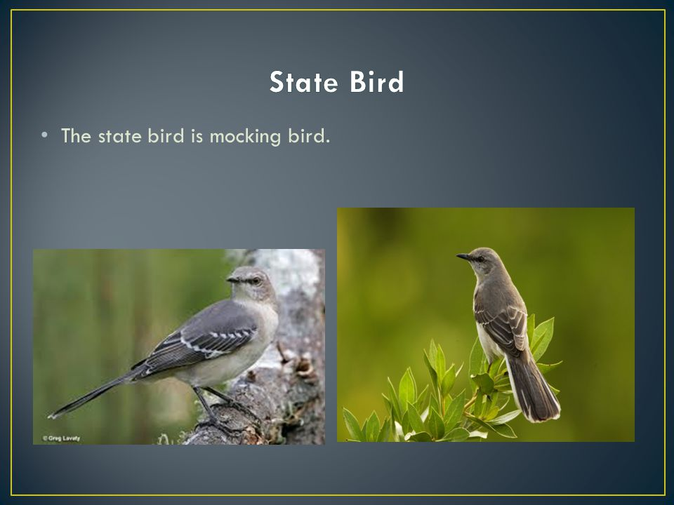 The state bird is mocking bird.