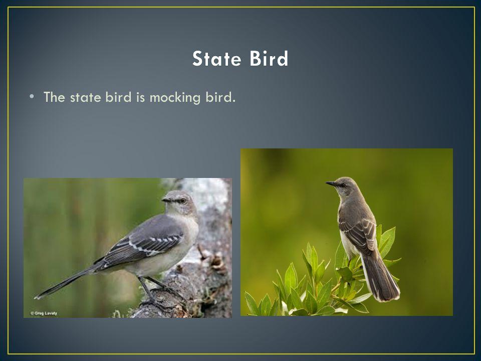 The state bird is mocking bird.