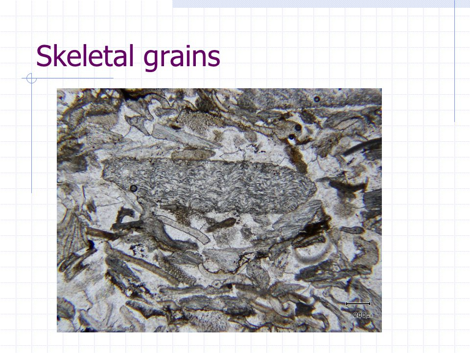 Skeletal grains