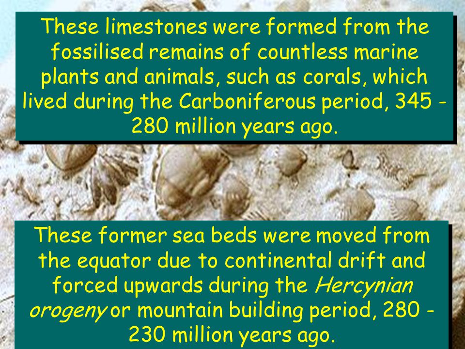 These limestones were formed from the fossilised remains of countless marine plants and animals, such as corals, which lived during the Carboniferous period, 345 - 280 million years ago.