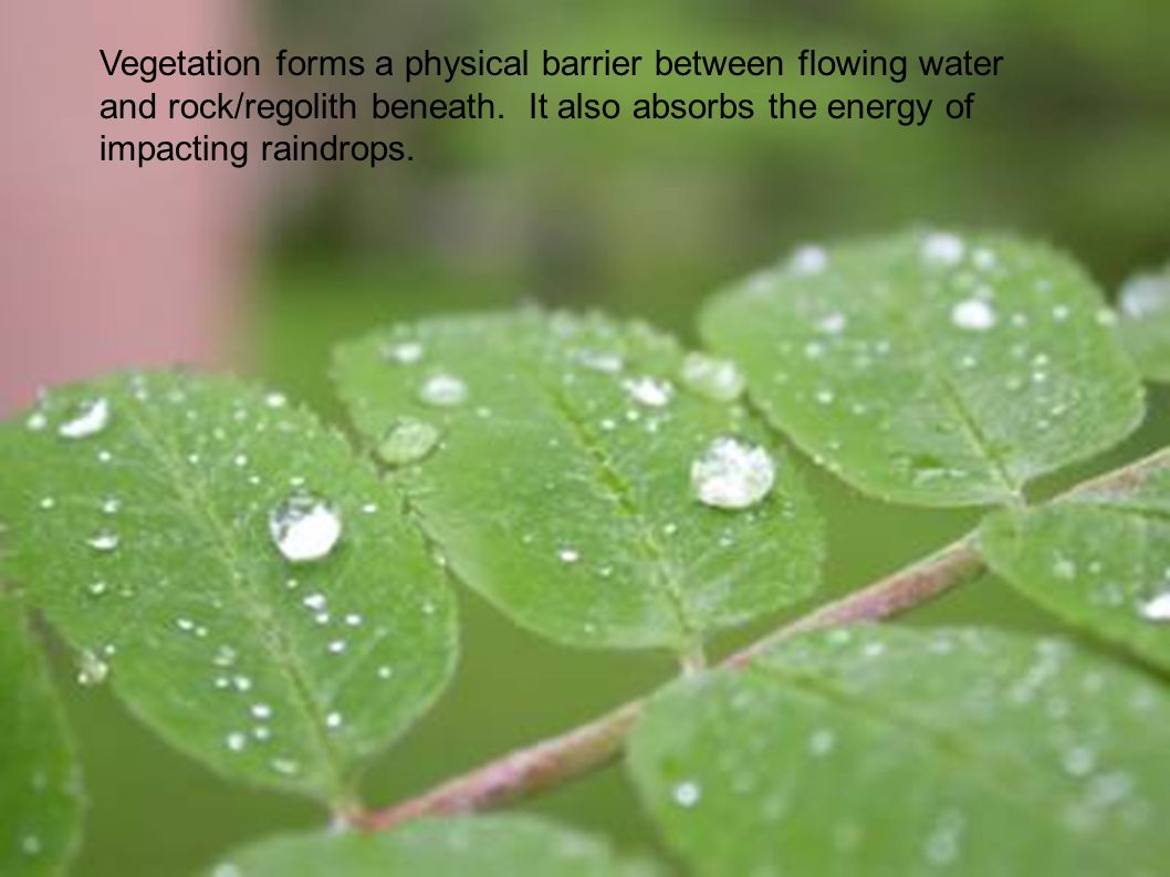 Vegetation forms a physical barrier between flowing water and rock/regolith beneath. It also absorbs the energy of impacting raindrops.