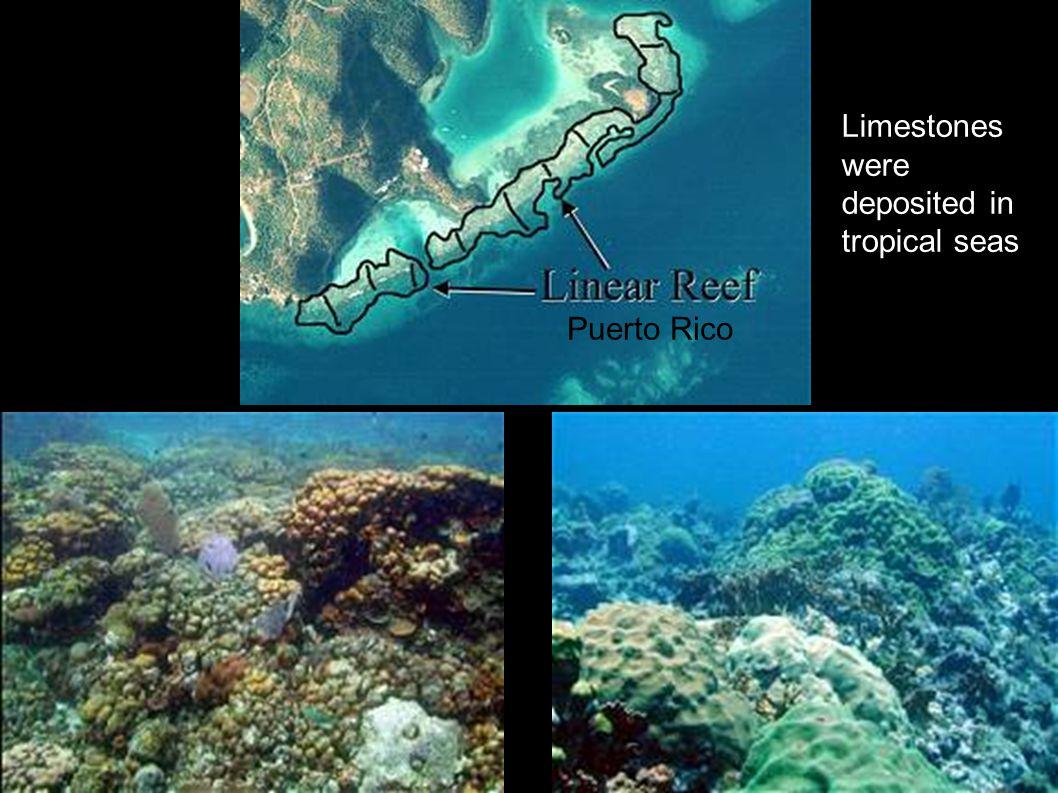 Limestones were deposited in tropical seas Puerto Rico