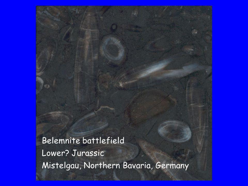 Belemnite battlefield Lower Jurassic Mistelgau, Northern Bavaria, Germany