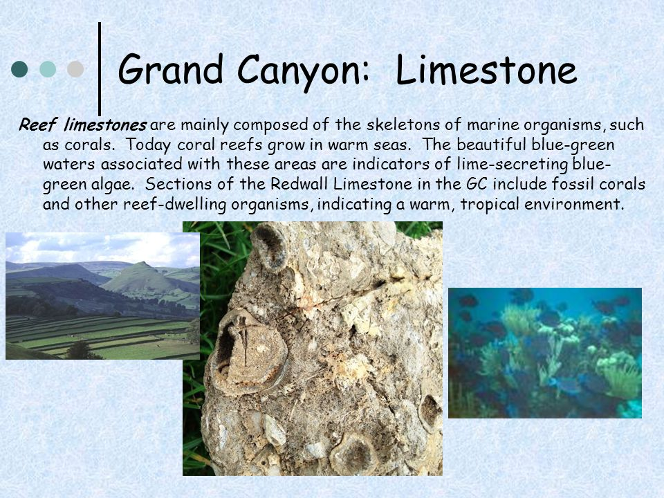 Grand Canyon: Limestone Reef limestones are mainly composed of the skeletons of marine organisms, such as corals. Today coral reefs grow in warm seas.