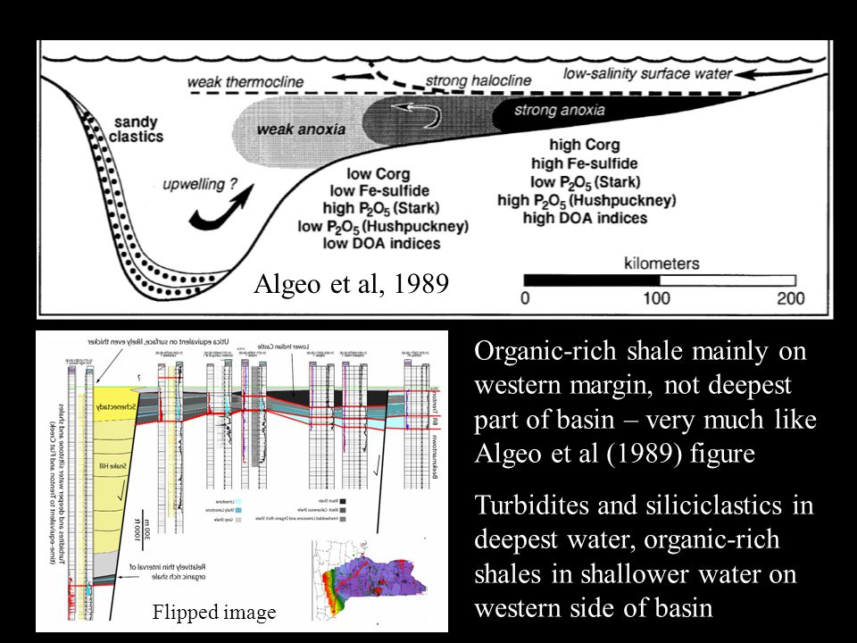 Algeo et al, 1989 Organic-rich shale mainly on western margin, not deepest part of basin – very much like Algeo et al (1989) figure Turbidites and siliciclastics in deepest water, organic-rich shales in shallower water on western side of basin Flipped image