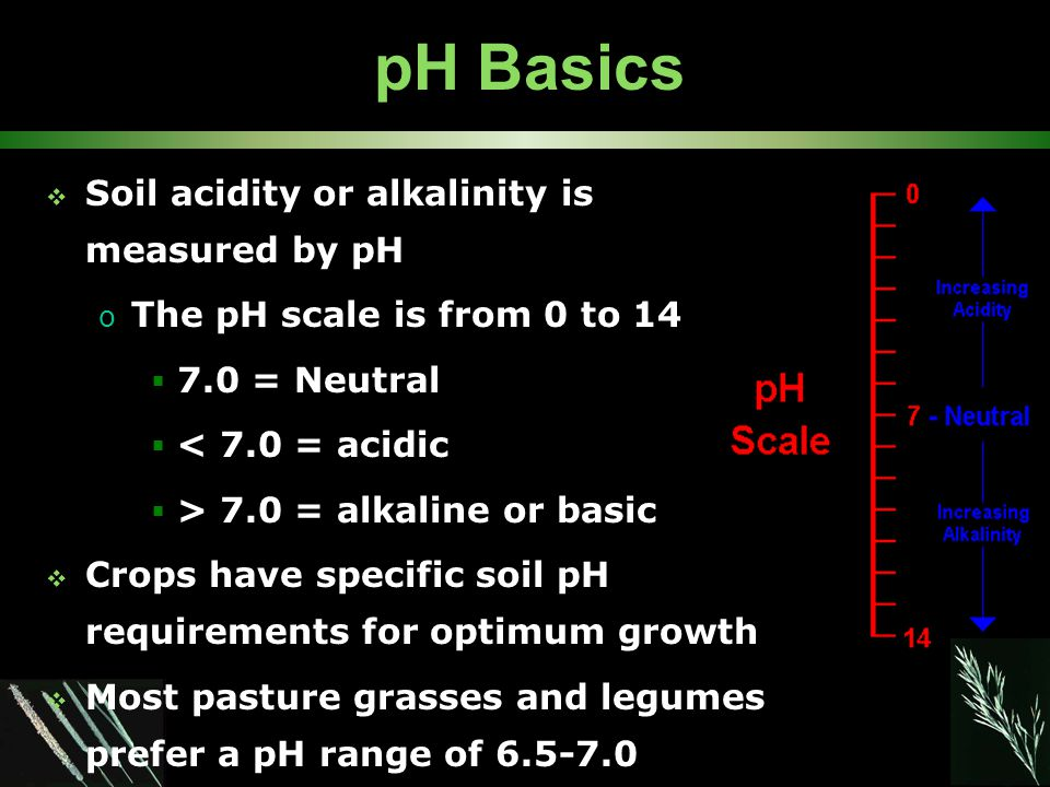 pH Basics  Soil acidity or alkalinity is measured by pH o The pH scale is from 0 to 14  7.0 = Neutral  < 7.0 = acidic  > 7.0 = alkaline or basic  Crops have specific soil pH requirements for optimum growth  Most pasture grasses and legumes prefer a pH range of 6.5-7.0