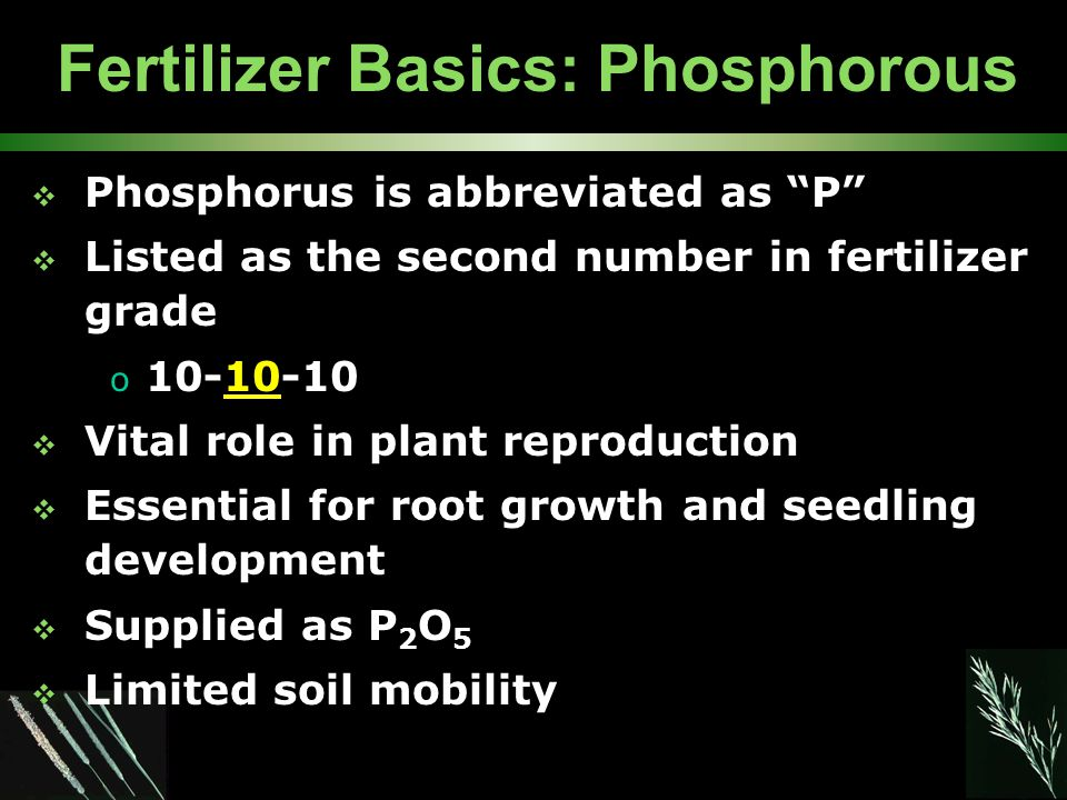 Fertilizer Basics: Phosphorous  Phosphorus is abbreviated as P  Listed as the second number in fertilizer grade o 10-10-10  Vital role in plant reproduction  Essential for root growth and seedling development  Supplied as P 2 O 5  Limited soil mobility