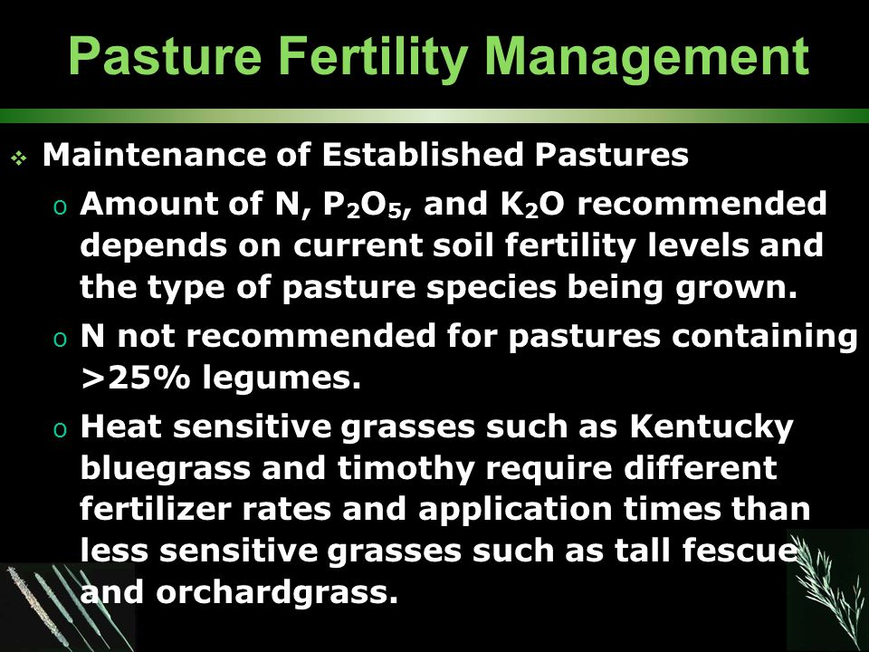 Pasture Fertility Management  Maintenance of Established Pastures o Amount of N, P 2 O 5, and K 2 O recommended depends on current soil fertility levels and the type of pasture species being grown.