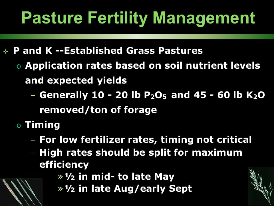 Pasture Fertility Management  P and K --Established Grass Pastures o Application rates based on soil nutrient levels and expected yields – Generally 10 - 20 lb P 2 O 5 and 45 - 60 lb K 2 O removed/ton of forage o Timing – For low fertilizer rates, timing not critical – High rates should be split for maximum efficiency »½ in mid- to late May »½ in late Aug/early Sept