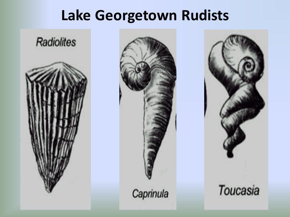 Lake Georgetown Rudists